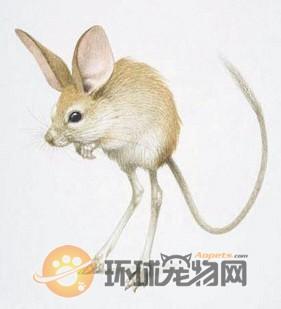 可爱的小兔子头部简笔画