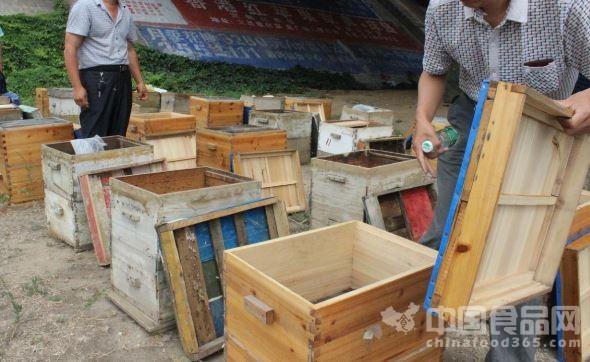 """中国食品网讯 在路边搭个棚,棚子门口放几个蜂箱,蜂箱上放几瓶颜色不一的液体,自称是""""养蜂人自产自销""""……在本市郊区的一些马路旁边,不经意就能看到这类""""纯天然蜂蜜""""。这些所谓的""""蜂农""""现场销售是真的蜂蜜吗?   日前,按照群众提供的线索,莱州市场监督管理局执法人员来到实地进行实地暗访,在市区近郊发现了4处养蜂点。这些所谓的养蜂人都是将一瓶瓶装好的蜂蜜摆放在路面上供路人选购,而身后则摆放着一只只蜂箱。这些养蜂人"""